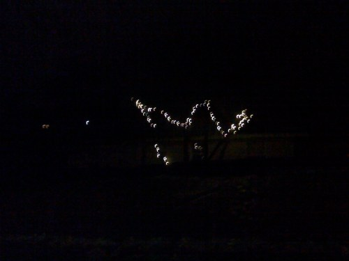 We just threw these lights in this tree.